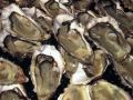 Oysters Large